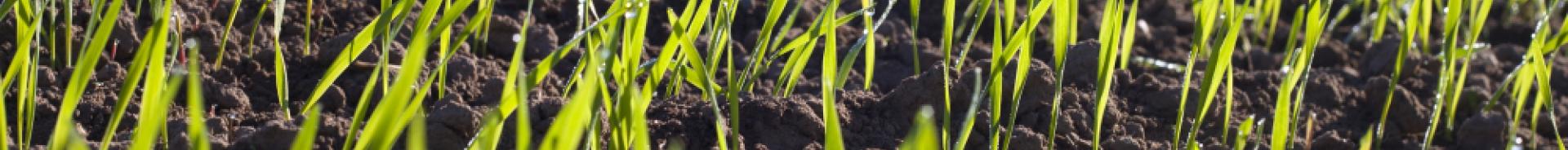 Scienze e Tecnologie Agrarie